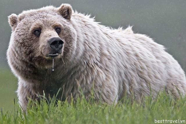 Hình 10 - Nơi du khách có thể gặp gỡ nhiều loài động vật quý hiếm