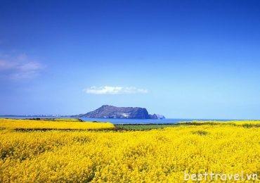 Chẳng cần visa bạn vẫn có thể vi vu xứ sở Kim Chi tại đảo ngọc Jeju