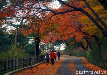 Ngất ngây trước vẻ đẹp mùa thu ở Hàn Quốc