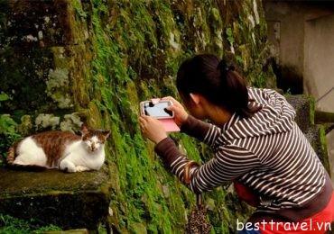 Làng Houtong lãnh địa của những chú mèo ở Đài Loan