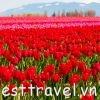 Kinh nghiệm du lịch Amsterdam cần biết