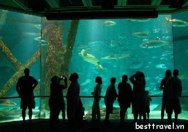 Điểm mặt những thủy cung đẹp nhất nước Mỹ