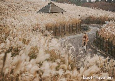 Thưởng ngoạn những khung cảnh mùa thu tuyệt đẹp trên đảo Jeju