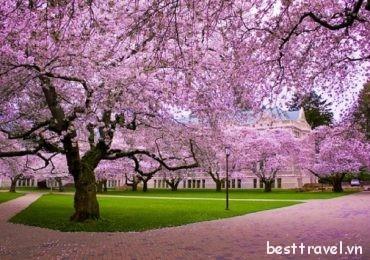 Những trải nghiệm tuyệt vời tại Hàn Quốc vào mùa xuân