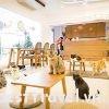 """3 quán cà phê thú cưng """"sốt sình sịch"""" ở Đà Nẵng"""