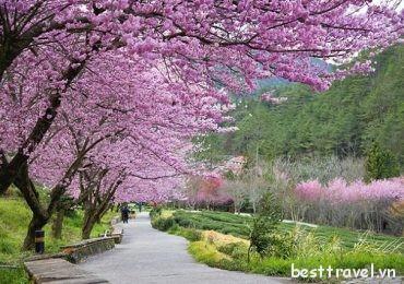 Top 3 lễ hội hoa mùa xuân nổi tiếng ở Đài Loan