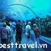 Khám phá Georgia Aquarium – Thủy cung rộng lớn nhất Atlanta
