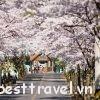 Những trải nghiệm mùa xuân cực thú vị ở Hàn Quốc